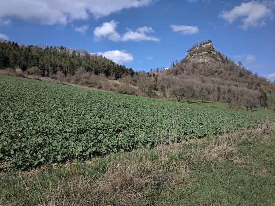 Der Hohenkrähen (Hegau-Vulkan)