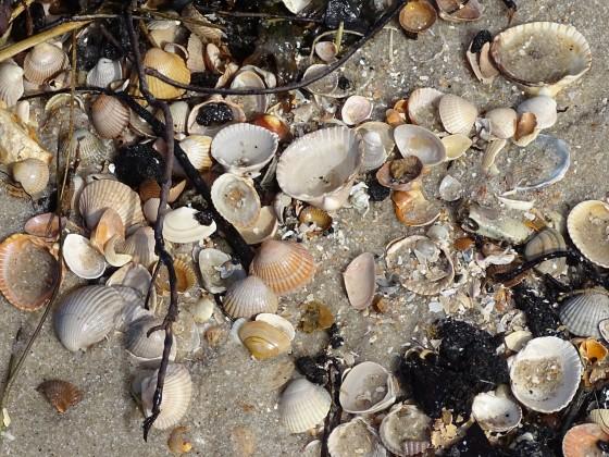 sogar der Strand hält viele Überraschungen bereit!