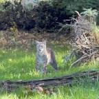 Tierpark Sababurg 2021 e-Golf-Treffen