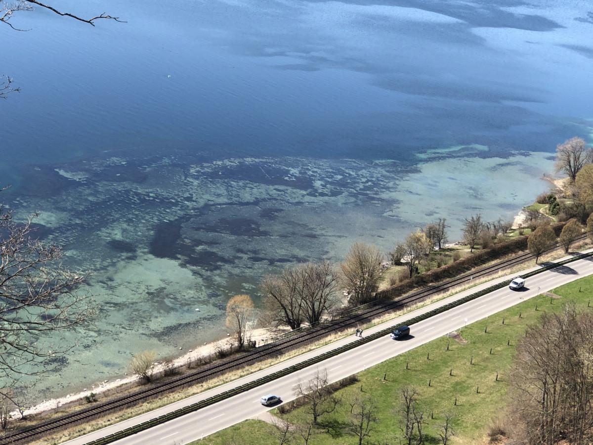 Korallenriff am Bodensee ?