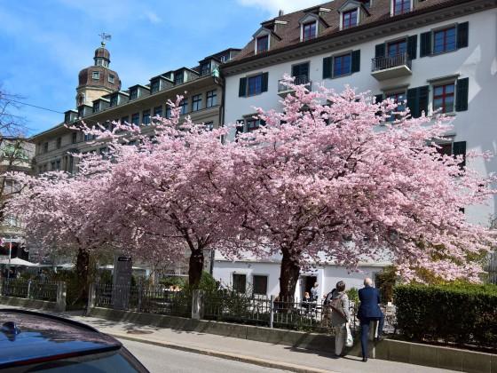 Frühling in St. Gallen