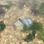 Aber auch die Meeresfauna hat einiges zu bieten...