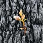 Selbst aus fast Kohle kann noch etwas wachsen - das ist Hoffnung!
